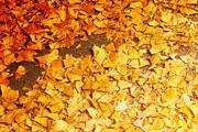 【旅游活动】秋天的色彩